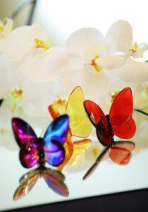 پروانه شیشهای